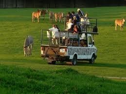 Safaritocht in de dierentuin